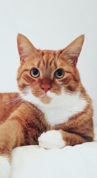 Costa the Cat donatie goed dierendoel