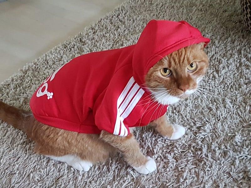 Adidog hoodie (donkerblauw)